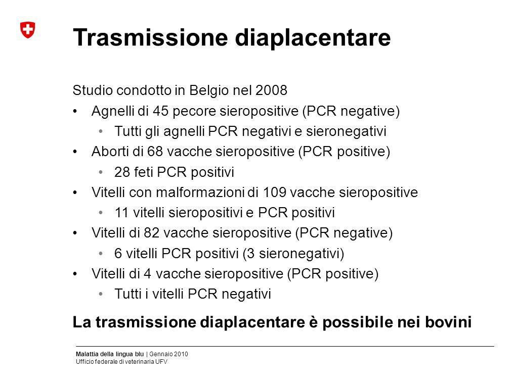 Malattia della lingua blu | Gennaio 2010 Ufficio federale di veterinaria UFV Trasmissione diaplacentare Studio condotto in Belgio nel 2008 Agnelli di