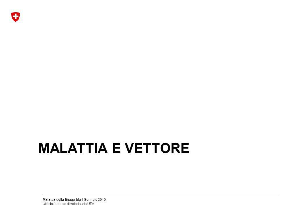 Malattia della lingua blu | Gennaio 2010 Ufficio federale di veterinaria UFV Scheda tecnica Bluetongue (BT):Malattia infettiva virale che colpisce i ruminanti Agente patogeno: Virus della malattia della lingua blu (BTV) 24 sierotipi Specie colpite:Ovini, caprini, bovini, ruminanti selvatici Trasmissione:Tramite vettori (insetti del genere Culicoides) Periodo :Da 5 a 12 giorni dincubazione Clinica:Dipende dal sierotipo, dalla specie e dalla razza: febbre, apatia, zoppia, edemi sottocutanei, iperemie ed erosioni delle mucose, scolo nasale, salivazione, congiuntivite, cianosi Distribuzione:In tutto il mondo, regioni tropicali temperate Diagnosi:Messa in evidenza degli antigeni e degli anticorpi mediante campioni di sangue Diagnosi diff.:Afta epizootica, vaiolo caprino, BVD, febbre catarrale maligna, stomatite Misure di lotta:Epizoozia altamente contagiosa (art.