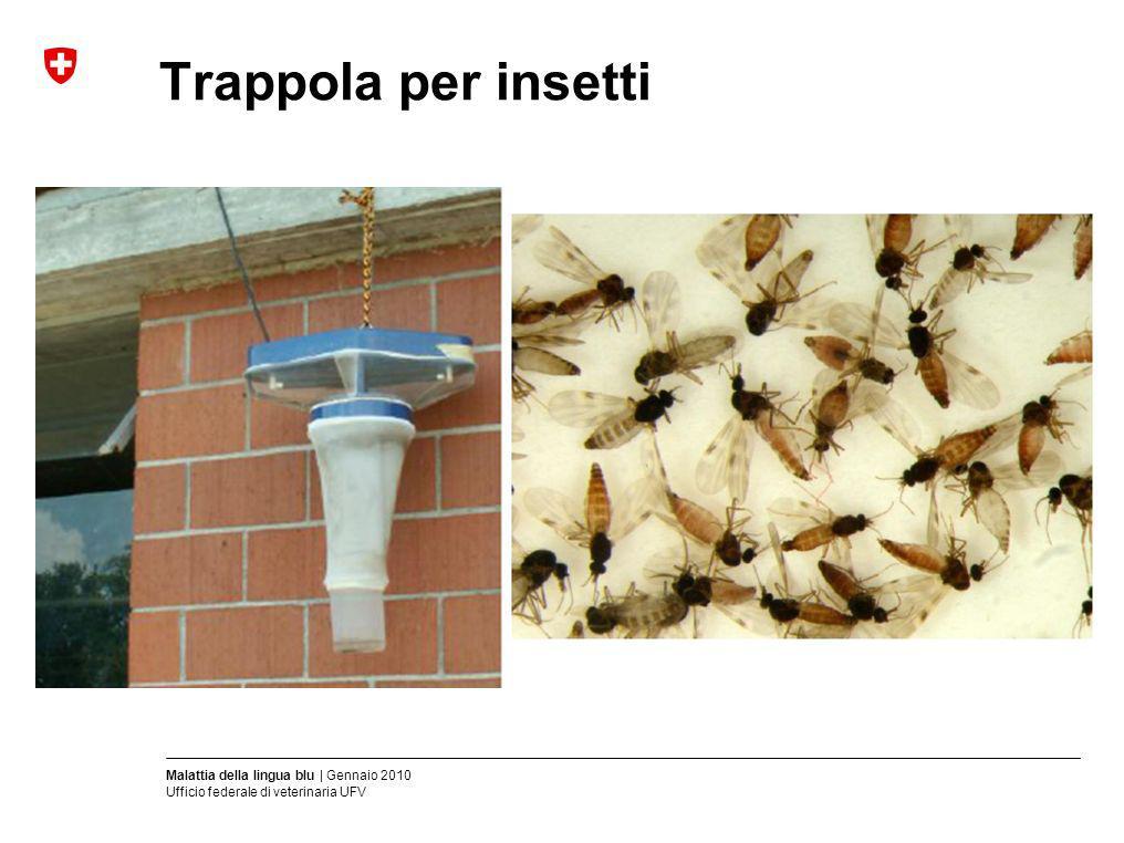 Malattia della lingua blu | Gennaio 2010 Ufficio federale di veterinaria UFV Trappola per insetti