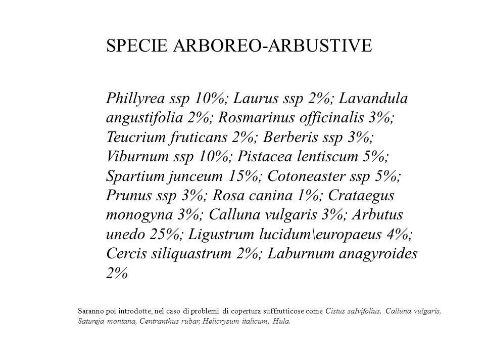 SPECIE ARBOREO-ARBUSTIVE Phillyrea ssp 10%; Laurus ssp 2%; Lavandula angustifolia 2%; Rosmarinus officinalis 3%; Teucrium fruticans 2%; Berberis ssp 3