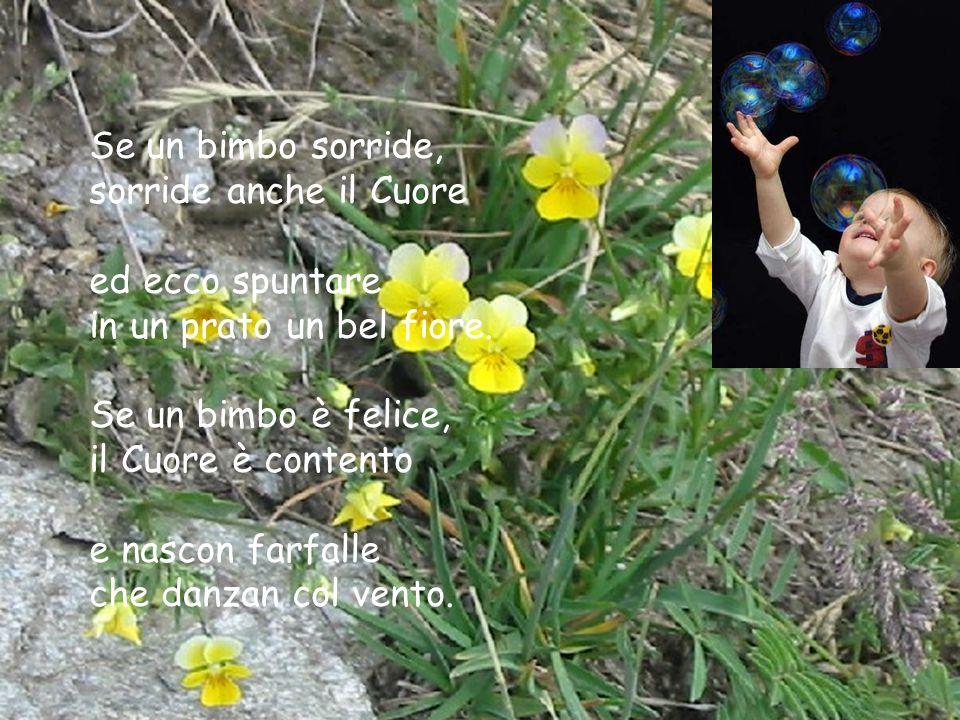 Se un bimbo sorride, sorride anche il Cuore ed ecco spuntare in un prato un bel fiore. Se un bimbo è felice, il Cuore è contento e nascon farfalle che