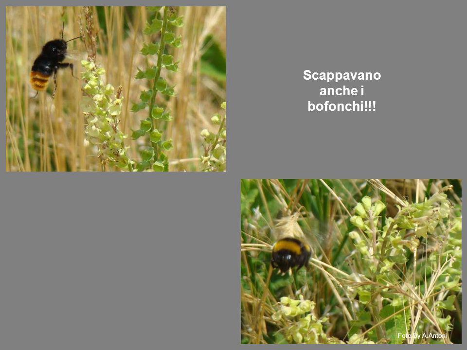 Scappavano anche i bofonchi!!! Foto By A.Antoni