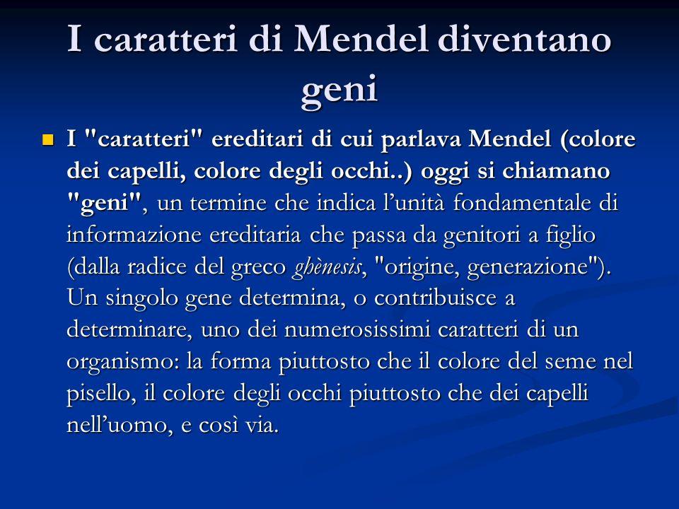 I caratteri di Mendel diventano geni I