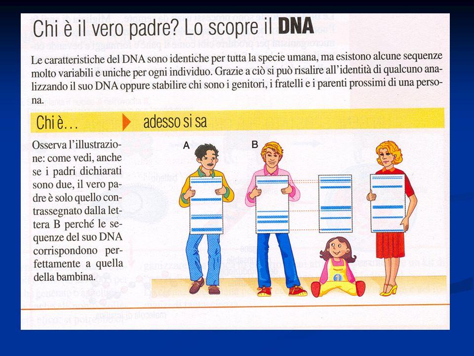 Malattie genetiche Malattie genetiche Cromosomiche Monogeniche Multifattoriali Autosomica Autosomica Associata all X Dominante Recessiva Classificazione delle malattie genetiche Dominante Recessiva