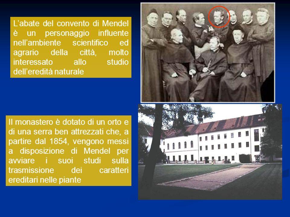 Labate del convento di Mendel è un personaggio influente nellambiente scientifico ed agrario della città, molto interessato allo studio delleredità na