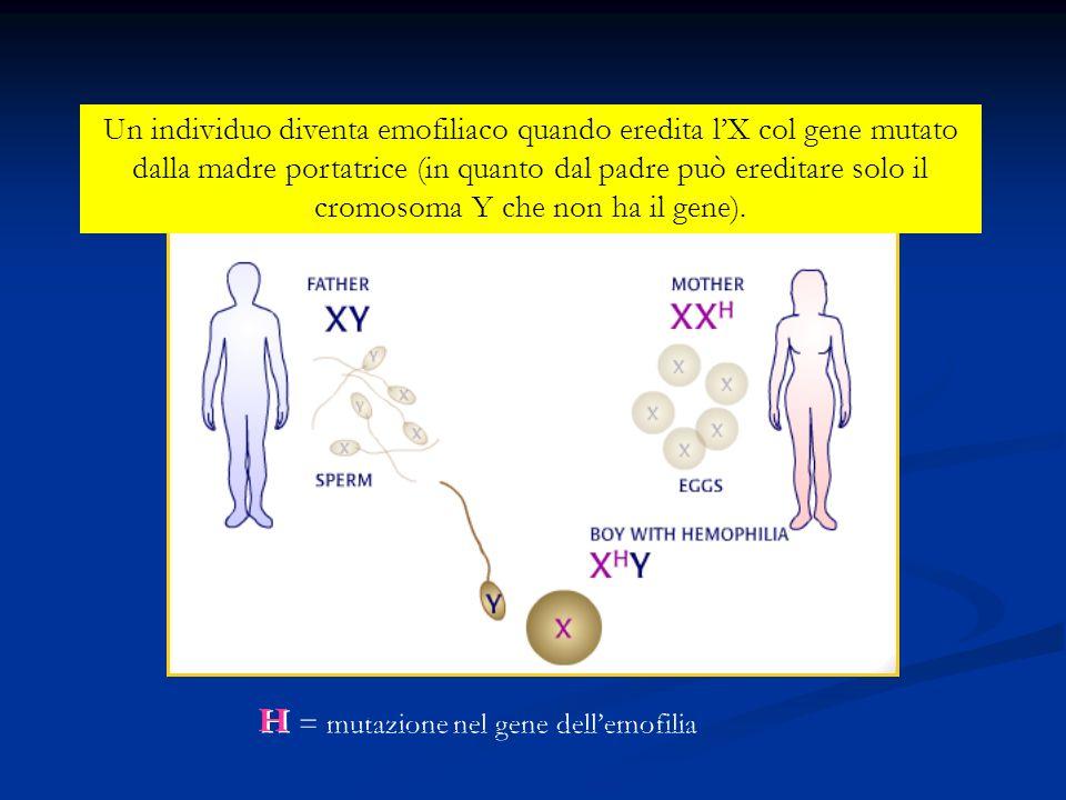 Un individuo diventa emofiliaco quando eredita lX col gene mutato dalla madre portatrice (in quanto dal padre può ereditare solo il cromosoma Y che no