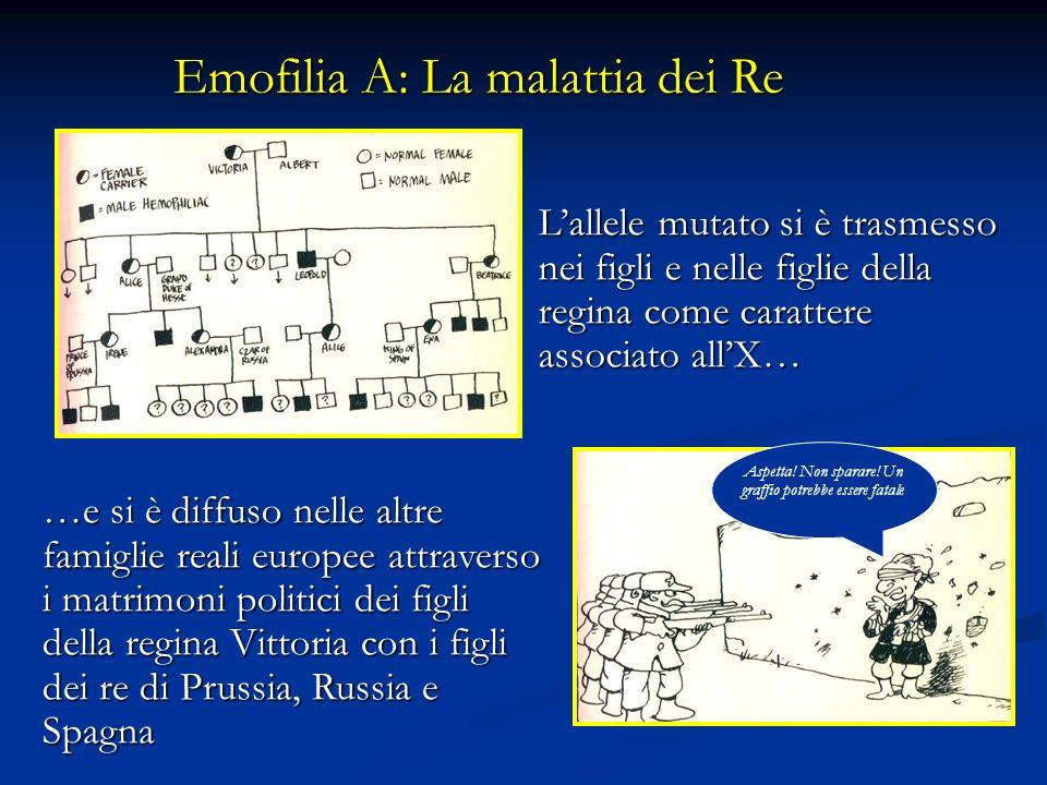 Lallele mutato si è trasmesso nei figli e nelle figlie della regina come carattere associato allX… Emofilia A: La malattia dei Re …e si è diffuso nell