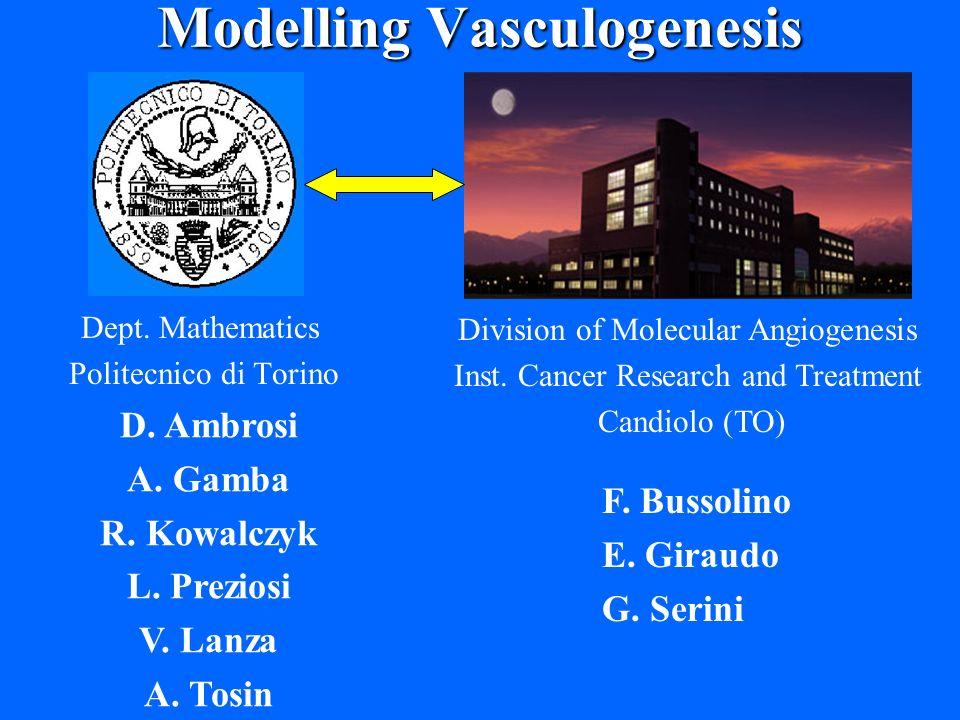 Modelling Vasculogenesis Dept.