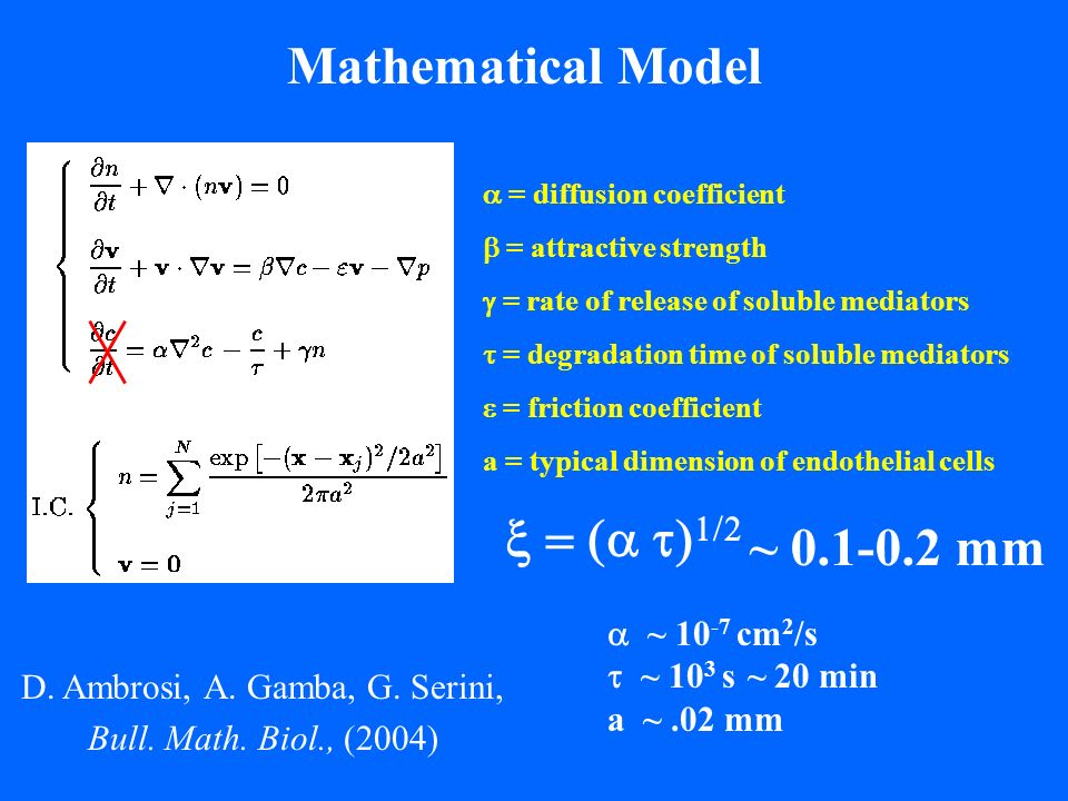 Mathematical Model = diffusion coefficient = attractive strength = rate of release of soluble mediators = degradation time of soluble mediators = friction coefficient a = typical dimension of endothelial cells D.