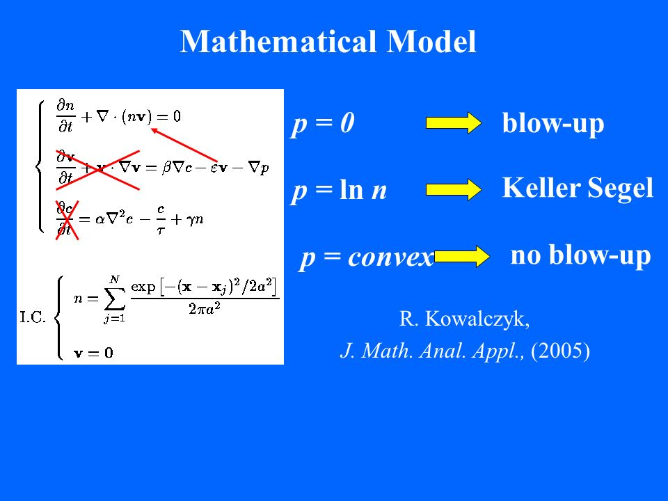 Mathematical Model Keller Segel p = ln n R. Kowalczyk, J. Math. Anal. Appl., (2005) no blow-up p = convex blow-up p = 0