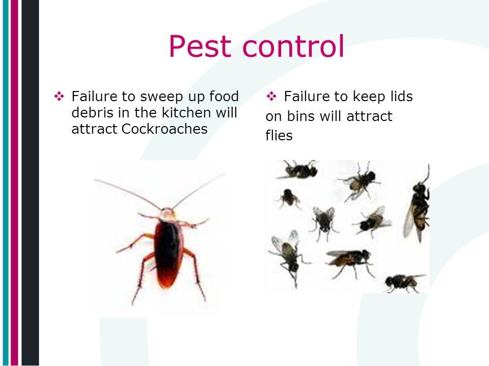 Pest control Failure to sweep up food debris in the kitchen will attract Cockroaches Failure to keep lids on bins will attract flies