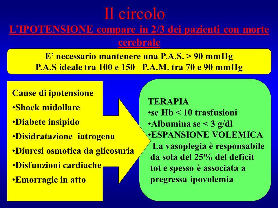 Il circolo LIPOTENSIONE compare in 2/3 dei pazienti con morte cerebrale E necessario mantenere una P.A.S. > 90 mmHg P.A.S ideale tra 100 e 150 P.A.M.