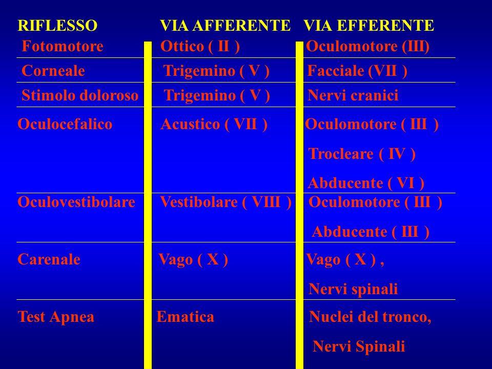 Fotomotore Ottico ( II ) Oculomotore (III) RIFLESSO VIA AFFERENTE VIA EFFERENTE Corneale Trigemino ( V ) Facciale (VII ) Stimolo doloroso Trigemino (