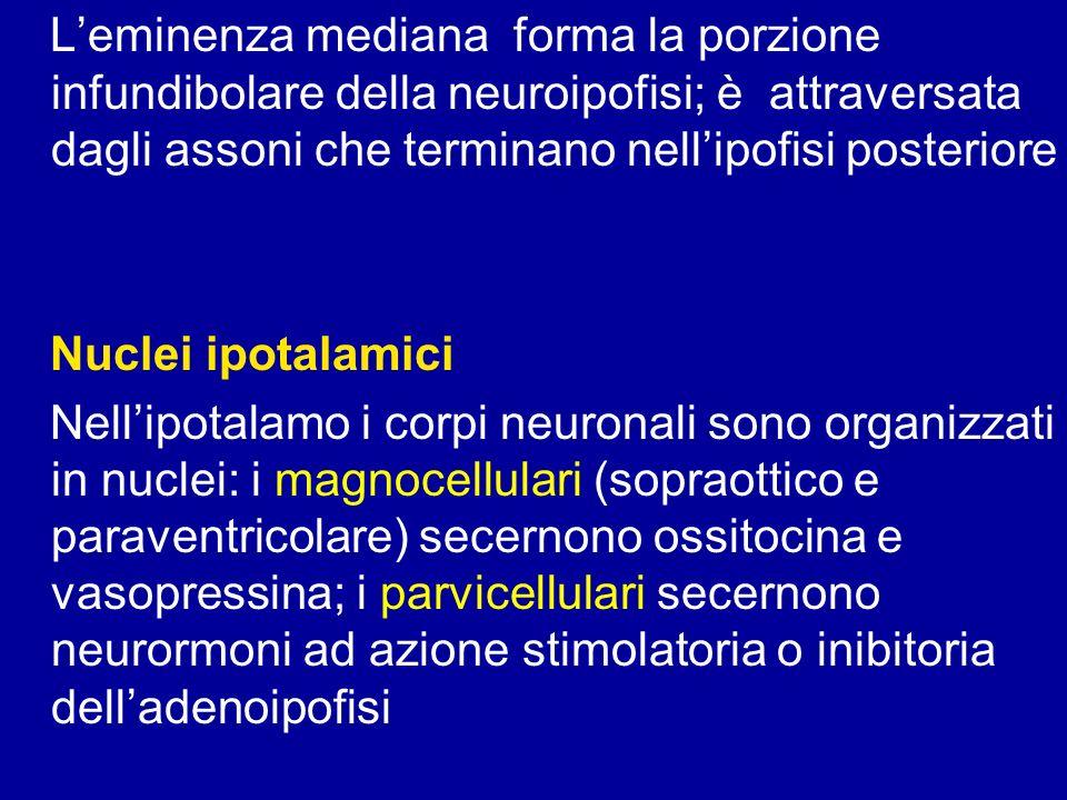 Somatostatina: inibisce la secrezione di GH e TSH, le cellule secernenti sono localizzate nel nuclo arcuato, periventricolare e ventromediale, ma anche GE, pancreas, tiroide, ghiandole salivari e apparato urinario.