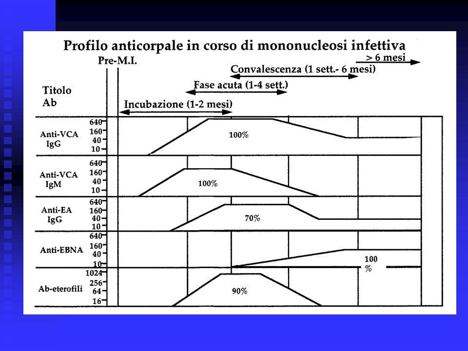 Citomegalovirus- diagnosi Isolamento virale (urina, sangue, saliva, latte materno, liquido seminale, feci) colture di fibroblasti umani (effetto citopatico: 5-7 giorni/2- 6 settimane); metodica shell vials ( inoculazione del campione biologico su monostrato di fibrobalsti umani per 16-24 ore a 37 °C;la presenza del virus viene rilevata mediante una reazione di immunofluorescenza indiretta o di immunoperossidasi con un anticorpo monoclonale specifico per lantigene p72) Isolamento virale (urina, sangue, saliva, latte materno, liquido seminale, feci) colture di fibroblasti umani (effetto citopatico: 5-7 giorni/2- 6 settimane); metodica shell vials ( inoculazione del campione biologico su monostrato di fibrobalsti umani per 16-24 ore a 37 °C;la presenza del virus viene rilevata mediante una reazione di immunofluorescenza indiretta o di immunoperossidasi con un anticorpo monoclonale specifico per lantigene p72) Dimostrazione di antigeni virali (permette di indentificare i leucociti infetti (PMN) del sangue periferico che esprimono la proteina pp65 medinate immumofluorescenza) Dimostrazione di antigeni virali (permette di indentificare i leucociti infetti (PMN) del sangue periferico che esprimono la proteina pp65 medinate immumofluorescenza) Dimostrazione dellacido nucleico (HCMV-DNA): sangue periferico; LCR; umor acqueo; Dimostrazione dellacido nucleico (HCMV-DNA): sangue periferico; LCR; umor acqueo; Rilevamento di anticorpi specifici (IgM e IgG anti- HCMV) Rilevamento di anticorpi specifici (IgM e IgG anti- HCMV)