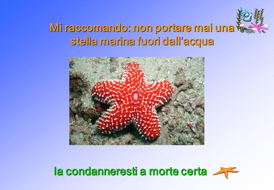 Mi raccomando: non portare mai una stella marina fuori dallacqua la condanneresti a morte certa