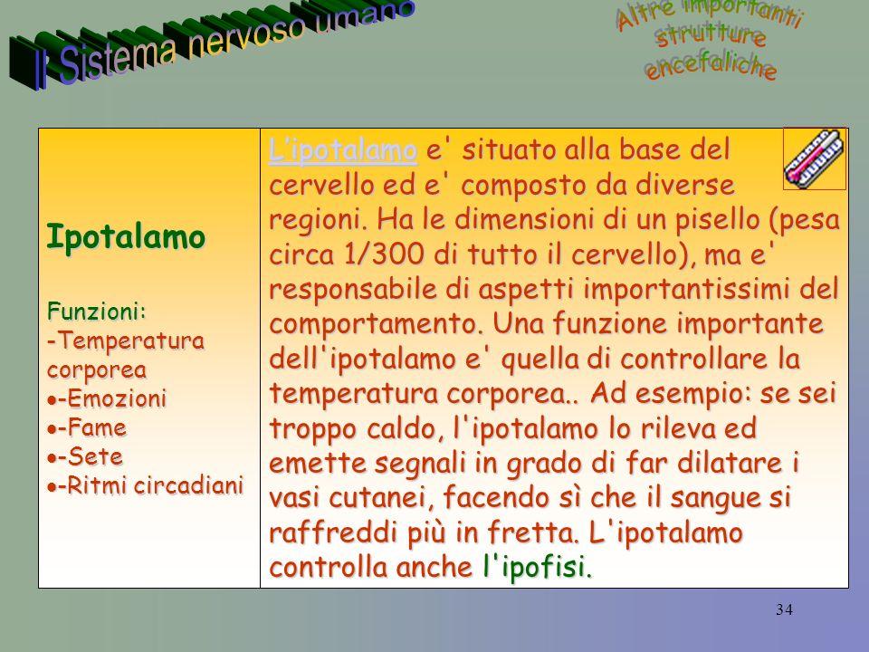 34 LipotalamoLipotalamo e situato alla base del cervello ed e composto da diverse regioni.