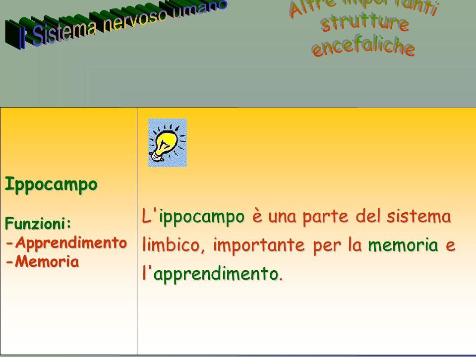 37 Annarita Ruberto L ippocampo è una parte del sistema limbico, importante per la memoria e l apprendimento.