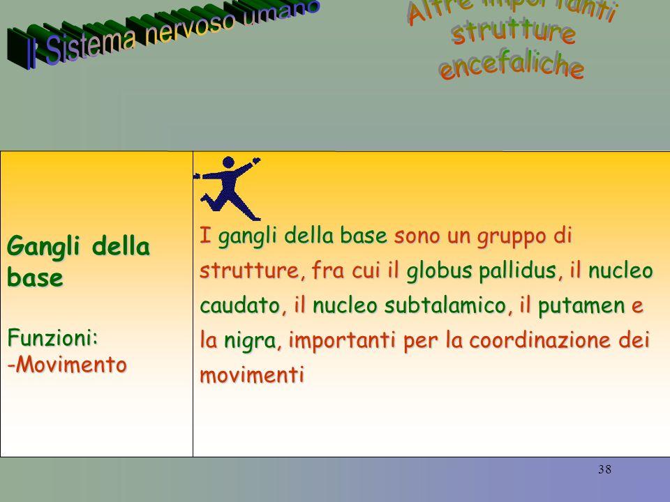 38 I gangli della base sono un gruppo di strutture, fra cui il globus pallidus, il nucleo caudato, il nucleo subtalamico, il putamen e la nigra, importanti per la coordinazione dei movimenti Gangli della base Funzioni:-Movimento