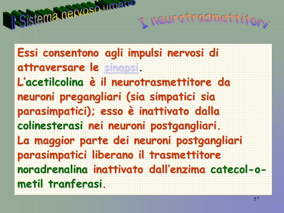 57 Essi consentono agli impulsi nervosi di attraversare le sinapsi.