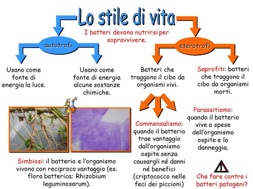 Batteri che traggono il cibo da organismi vivi. autotrofiautotrofi eterotrofieterotrofi Saprofiti: batteri che traggono il cibo da organismi morti. Us