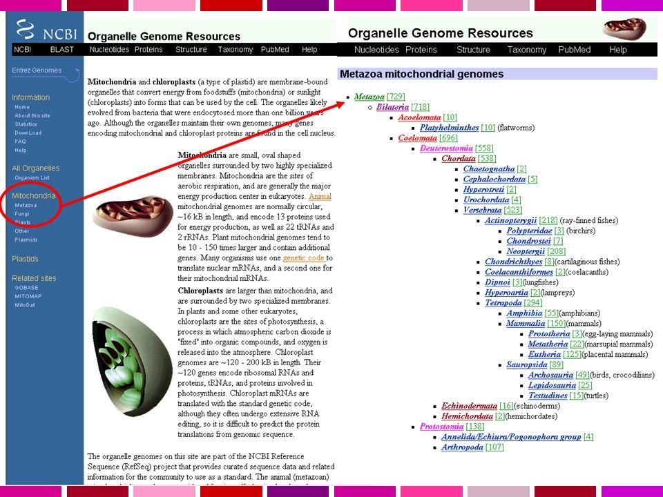 Sample Genome Viewer image, BRCA1 region Genome backbone STS markers Known genes RefSeq genes Gene predictions GenBank mRNAs repeats GenBank ESTs conservation SNPs MGC clones