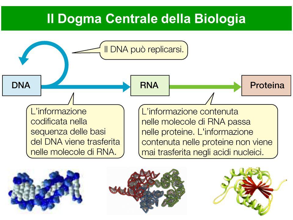 Il Dogma Centrale della Biologia