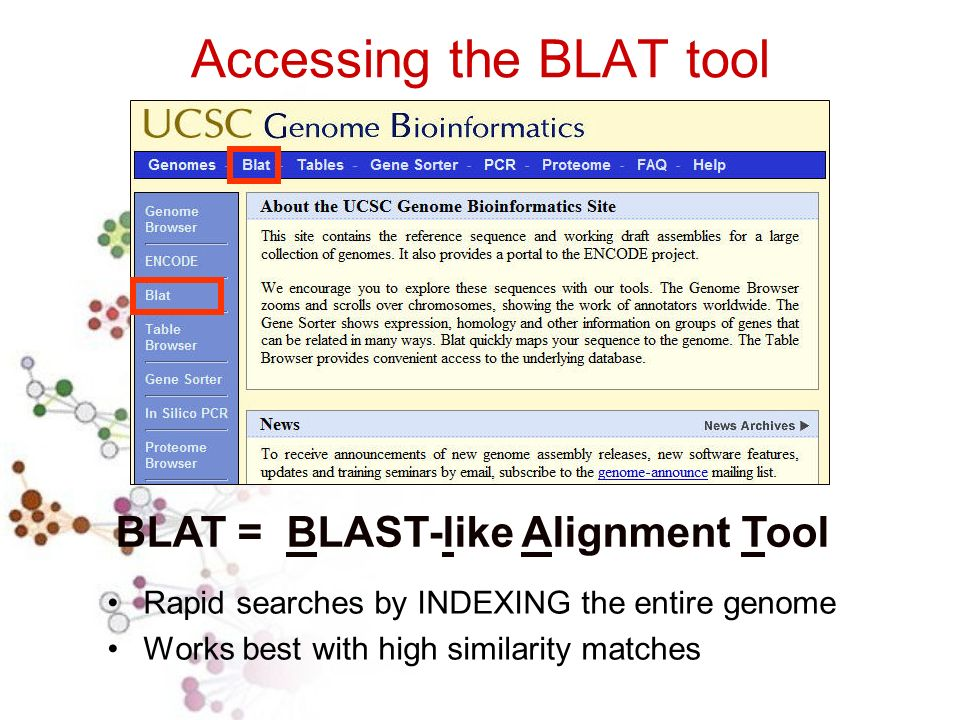 Accessing the BLAT tool Rapid searches by INDEXING the entire genome Works best with high similarity matches BLAT = BLAST-like Alignment Tool