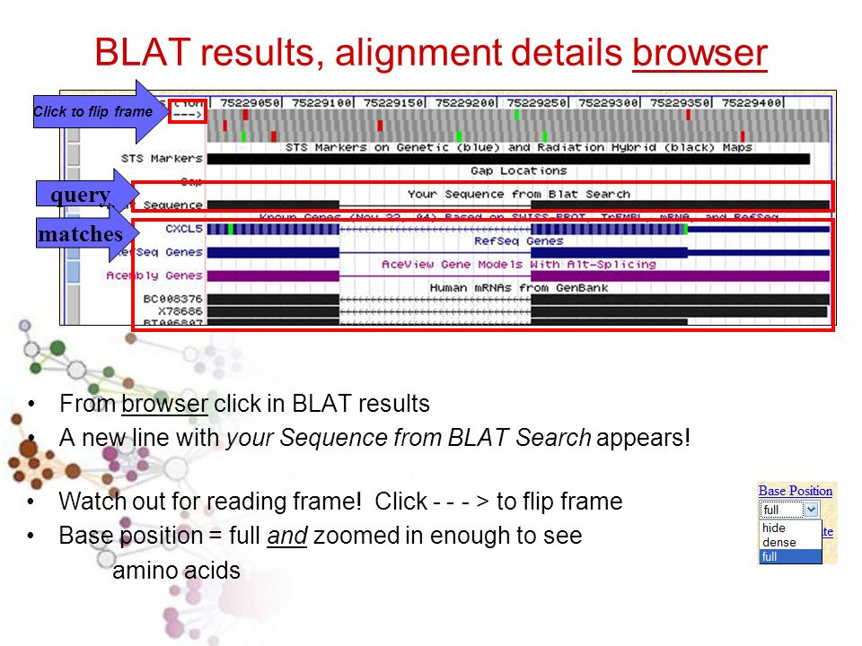 BLAT results, alignment details browser From browser click in BLAT results A new line with your Sequence from BLAT Search appears.