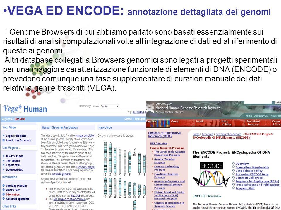 VEGA ED ENCODE: annotazione dettagliata dei genomi I Genome Browsers di cui abbiamo parlato sono basati essenzialmente sui risultati di analisi computazionali volte allintegrazione di dati ed al riferimento di queste ai genomi.