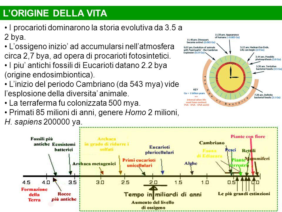 I procarioti dominarono la storia evolutiva da 3.5 a 2 bya. Lossigeno inizio ad accumularsi nellatmosfera circa 2,7 bya, ad opera di procarioti fotosi