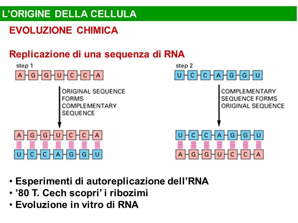 LORIGINE DELLA CELLULA EVOLUZIONE CHIMICA Replicazione di una sequenza di RNA Esperimenti di autoreplicazione dellRNA 80 T. Cech scopri i ribozimi Evo