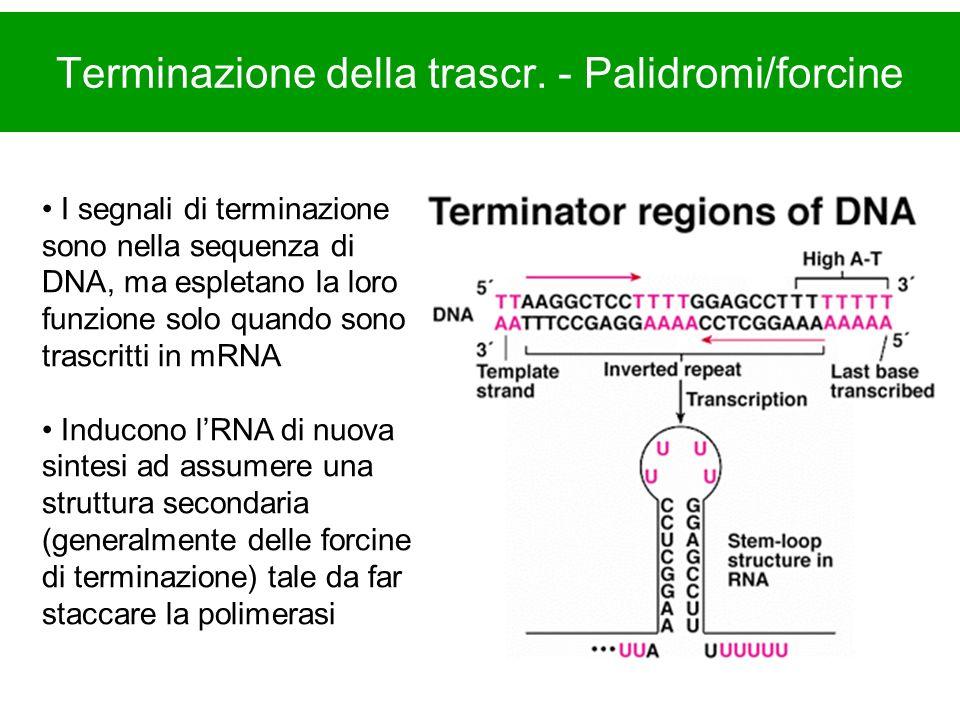 Terminazione della trascr.