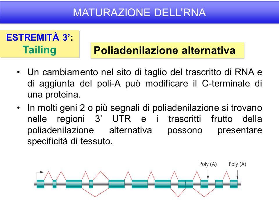 Un cambiamento nel sito di taglio del trascritto di RNA e di aggiunta del poli-A può modificare il C-terminale di una proteina.