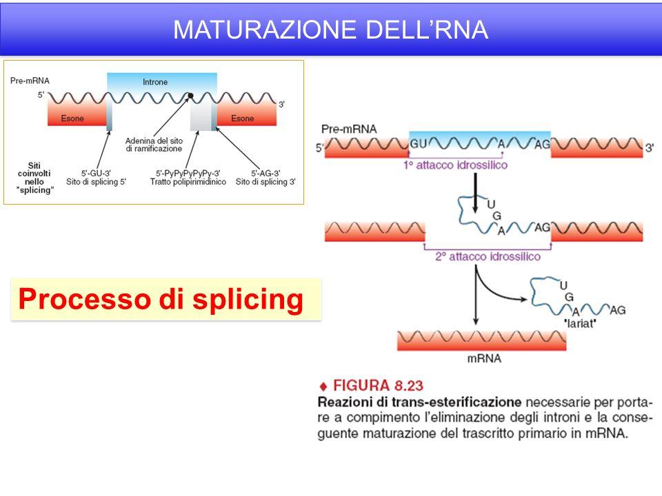 Processo di splicing