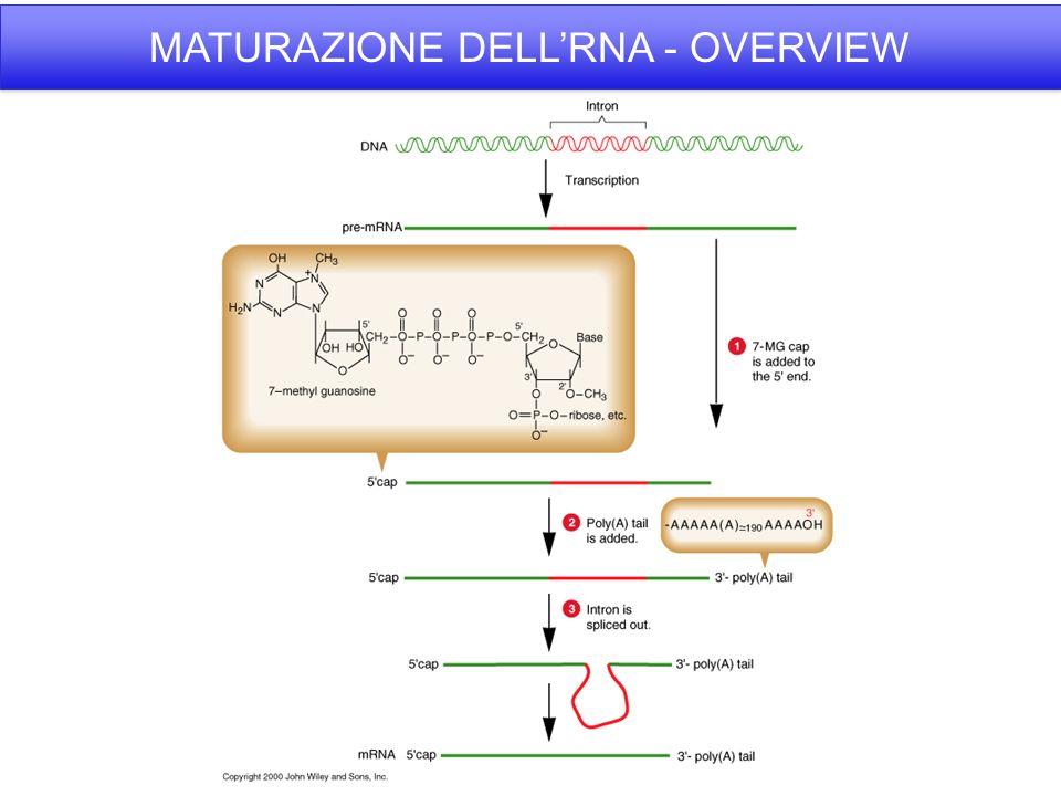 MATURAZIONE DELLRNA - OVERVIEW