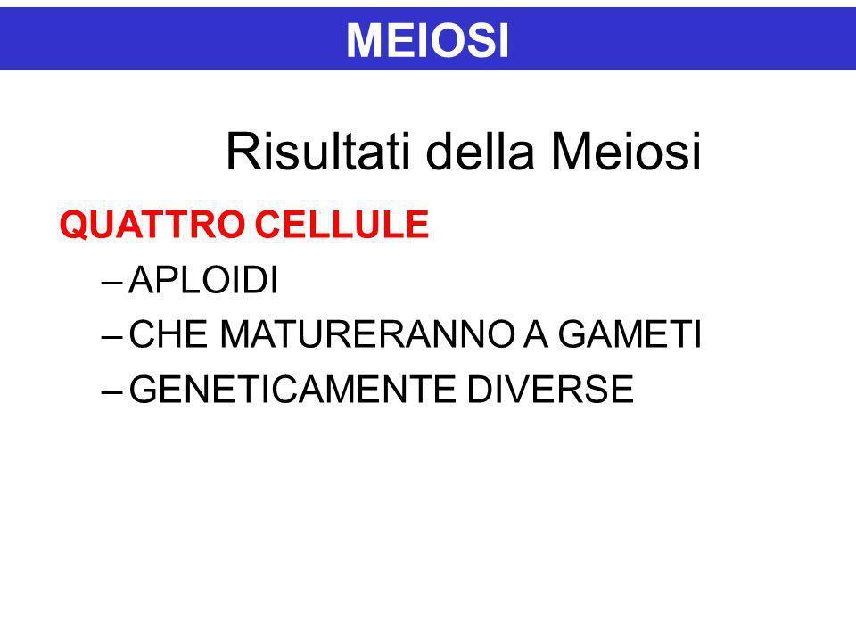 MEIOSI Risultati della Meiosi QUATTRO CELLULE –APLOIDI –CHE MATURERANNO A GAMETI –GENETICAMENTE DIVERSE