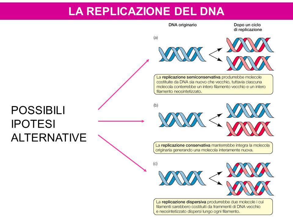 POSSIBILI IPOTESI ALTERNATIVE LA REPLICAZIONE DEL DNA