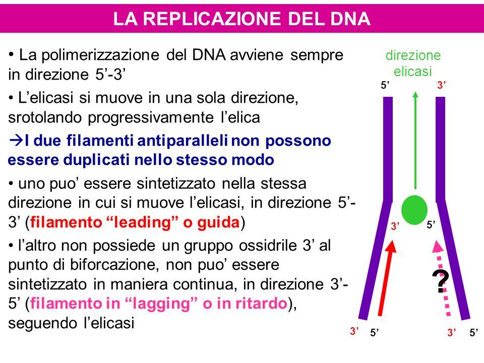 LA REPLICAZIONE DEL DNA La polimerizzazione del DNA avviene sempre in direzione 5-3 Lelicasi si muove in una sola direzione, srotolando progressivamen