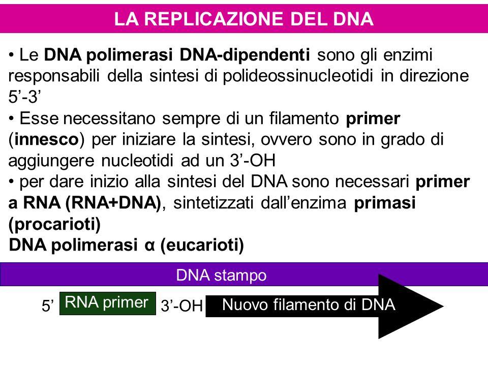LA REPLICAZIONE DEL DNA Le DNA polimerasi DNA-dipendenti sono gli enzimi responsabili della sintesi di polideossinucleotidi in direzione 5-3 Esse nece