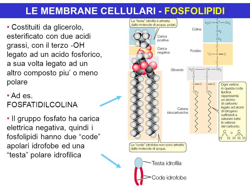 LE MEMBRANE CELLULARI TRASPORTO PASSIVO DIFFUSIONE: trasporto di materiale da un area in cui esso è presente ad alta concentrazione verso una a più bassa concentrazione.