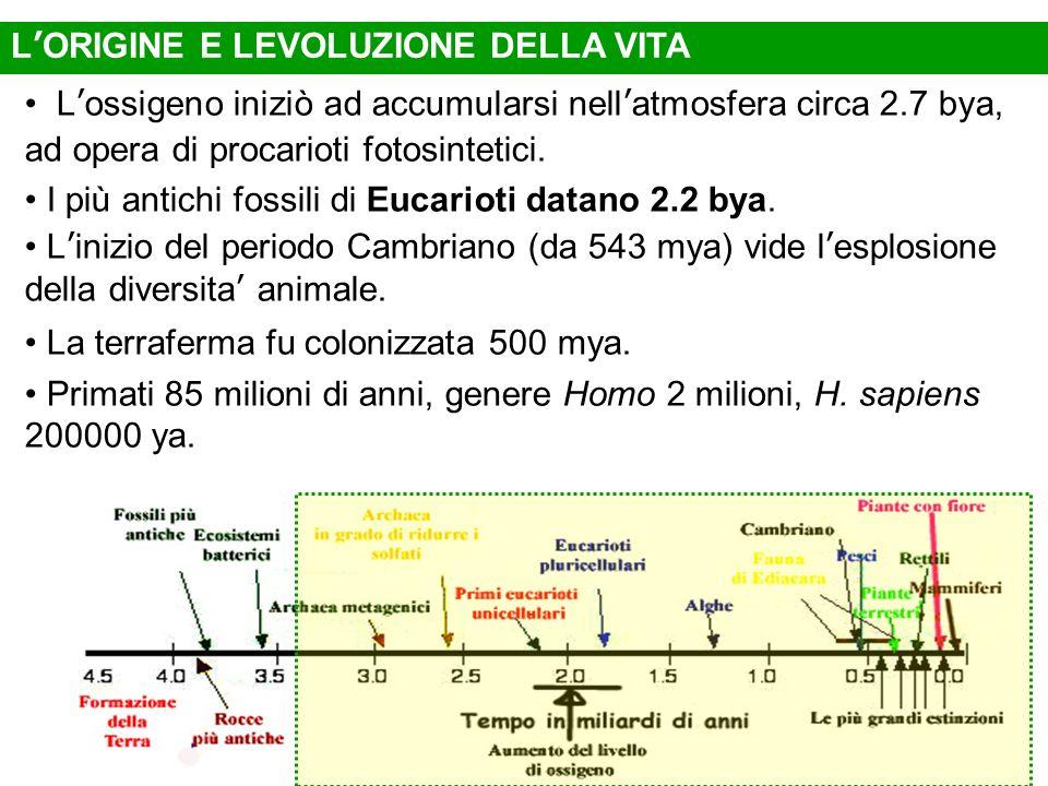 Lossigeno iniziò ad accumularsi nellatmosfera circa 2.7 bya, ad opera di procarioti fotosintetici. I più antichi fossili di Eucarioti datano 2.2 bya.