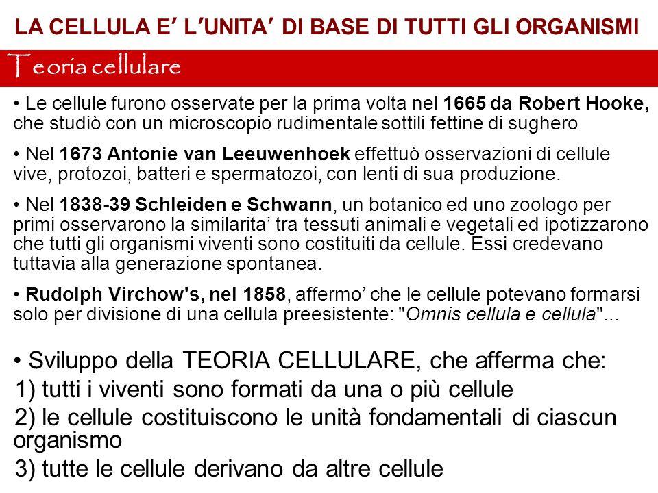 LORIGINE DELLA CELLULA – 3.