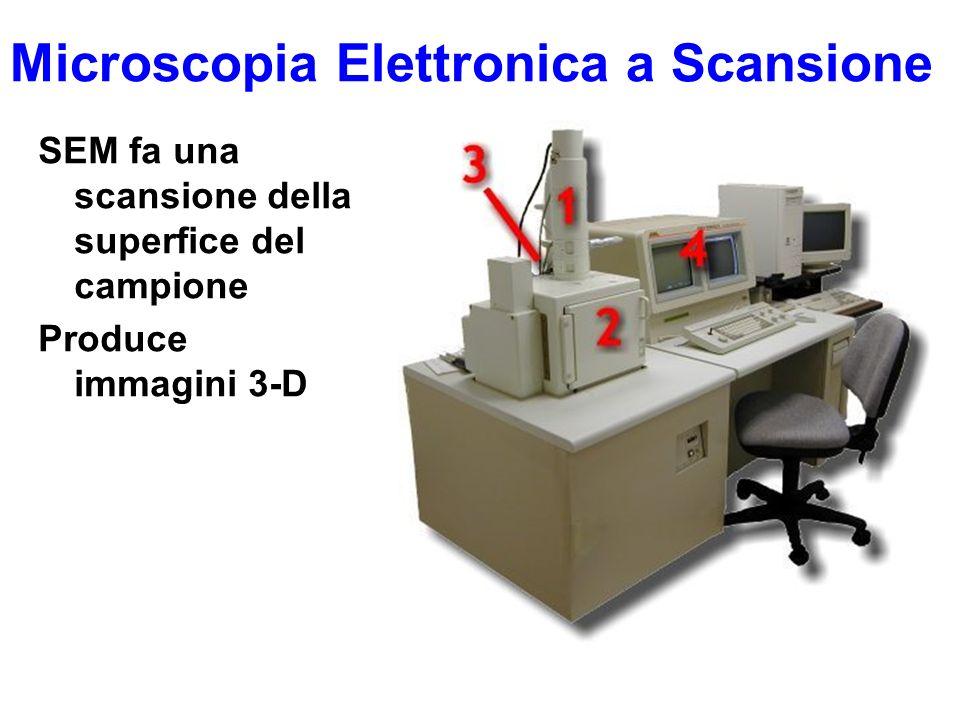 Microscopia Elettronica a Scansione SEM fa una scansione della superfice del campione Produce immagini 3-D