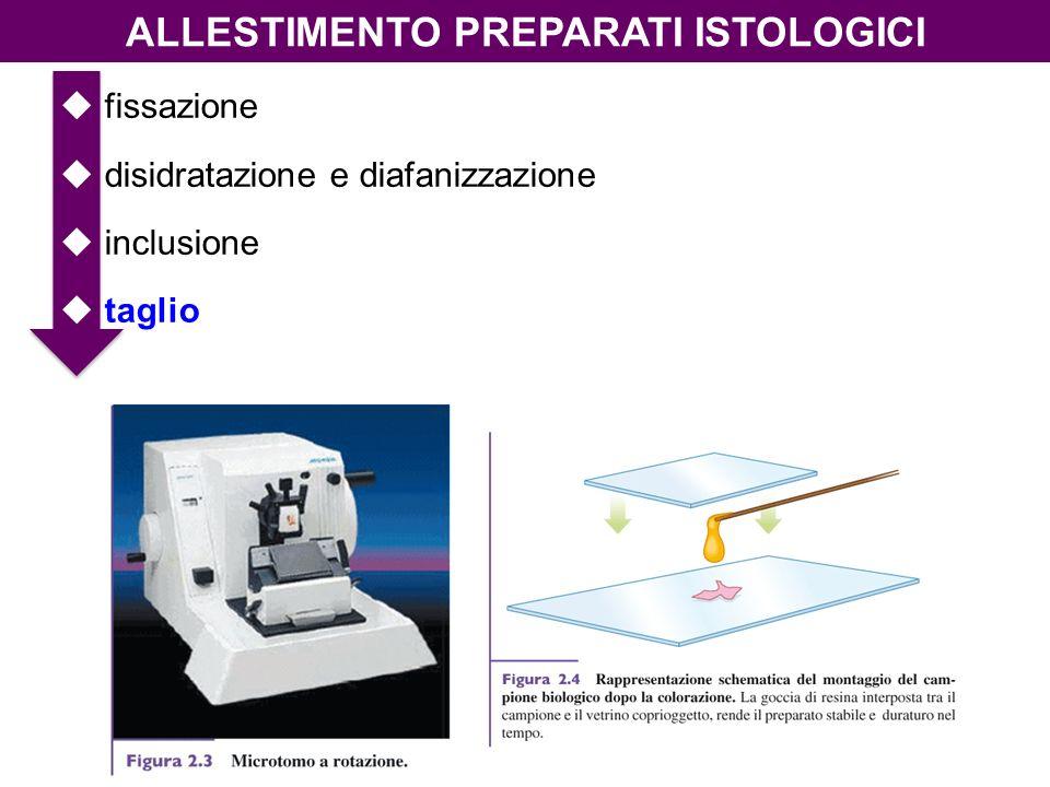 ALLESTIMENTO PREPARATI ISTOLOGICI fissazione disidratazione e diafanizzazione inclusione taglio