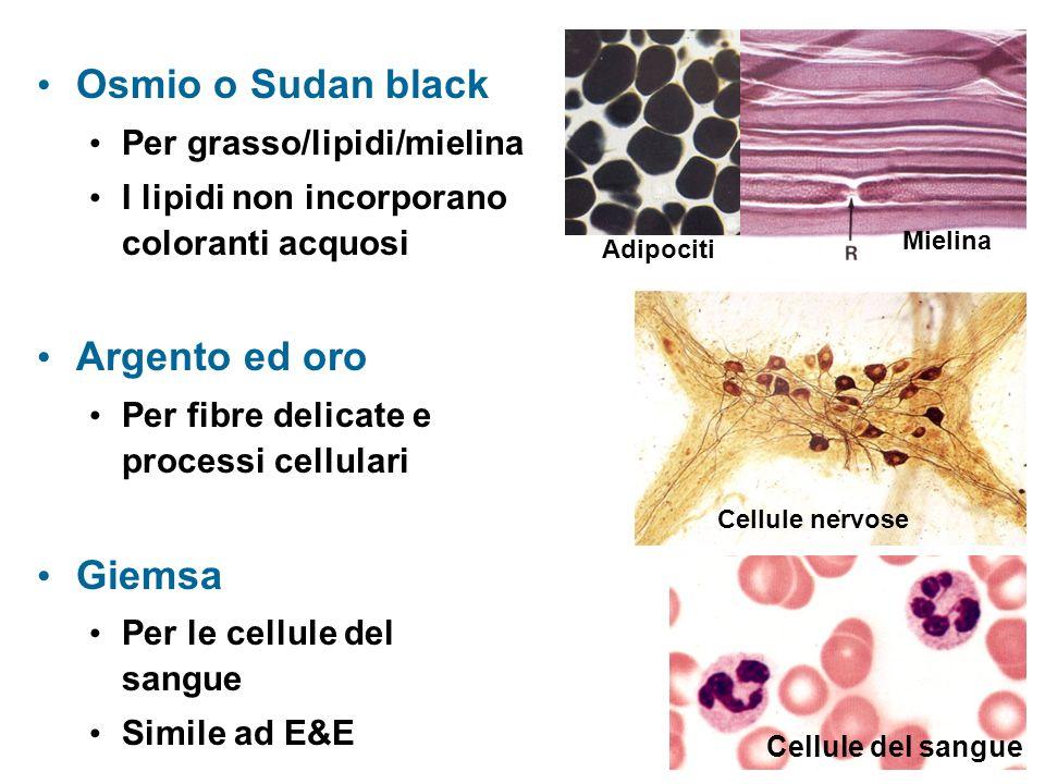 Osmio o Sudan black Osmio o Sudan black Per grasso/lipidi/mielina I lipidi non incorporano coloranti acquosi Argento ed oro Argento ed oro Per fibre delicate e processi cellulari Giemsa Giemsa Per le cellule del sangue Simile ad E&E Mielina Cellule nervose Cellule del sangue Adipociti