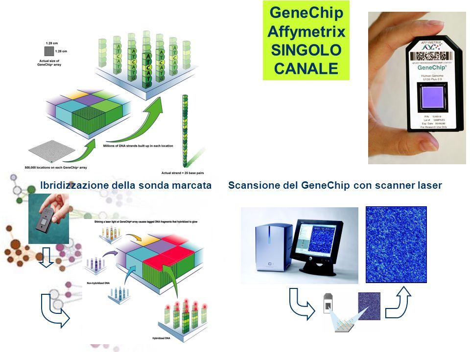 GeneChip Affymetrix SINGOLO CANALE Ibridizzazione della sonda marcataScansione del GeneChip con scanner laser