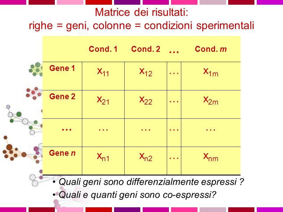 Matrice dei risultati: righe = geni, colonne = condizioni sperimentali Cond. 1Cond. 2 … Cond. m Gene 1 x 11 x 12 …x 1m Gene 2 x 21 x 22 …x 2m …………… Ge