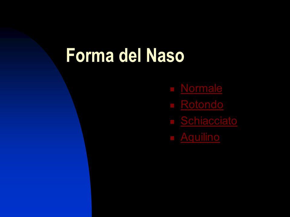 Forma del Naso Normale Rotondo Schiacciato Aquilino