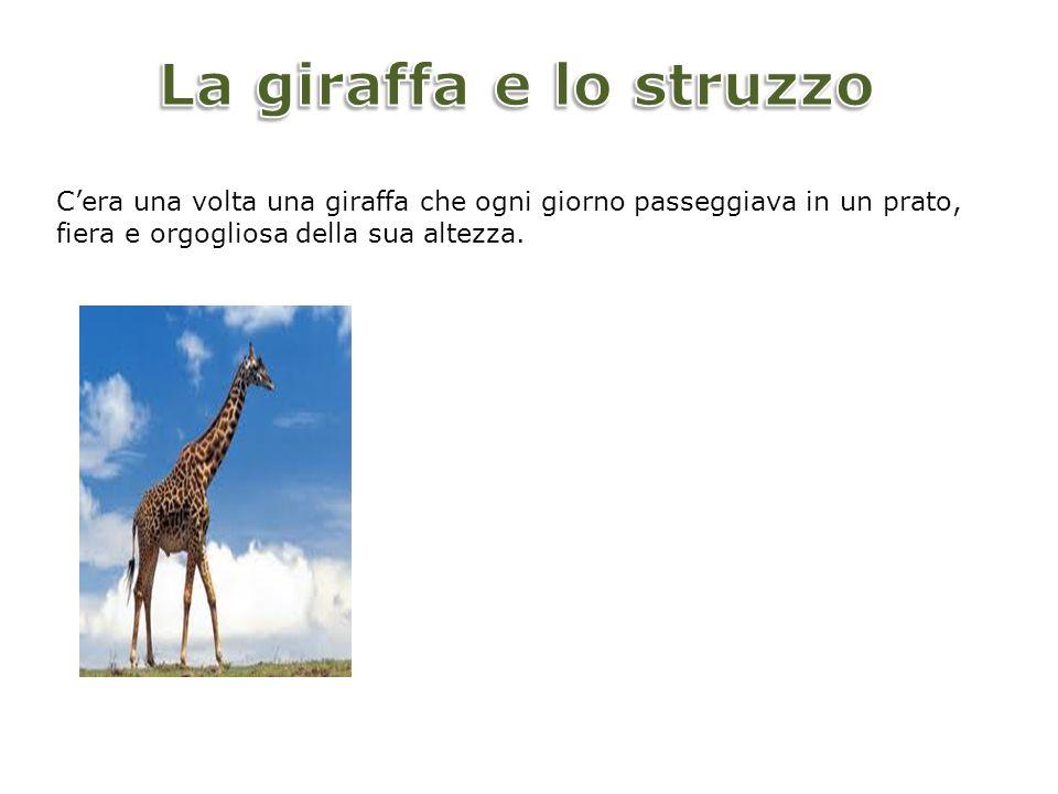 Uno struzzo che stava poco più in là la osservava con invidia e un bel giorno ebbe la presunzione di sfidare la giraffa e disse : - Facciamo a chi è più alto?